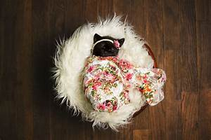 To celebrate her daughter's new kitten, this mom created a magical photoshoot (Gallery)