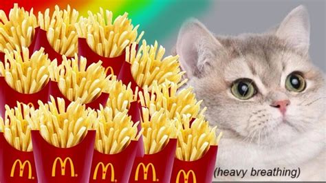 put  image   cat   french fries