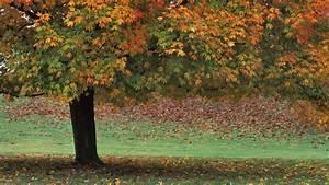 Autumn Wallpaper 1920x1080 - WallpaperSafari