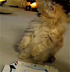 Sad Cat GIF - Find & Share on GIPHY