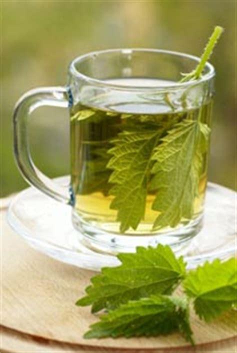nettle leaf tea recipe   nettle leaf recipes