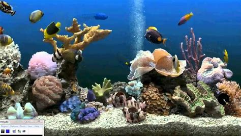 Animated Fish Tank Wallpaper Windows 7 - fish tank moving desktop backgrounds maxresdefault jpg