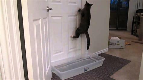 mulder opening doors remix   kitten cat