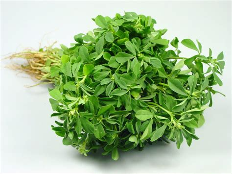Fenugreek Facts Health Benefits And Nutritional Value