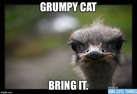 Ostrich Meme - disapproving ostrich imgflip