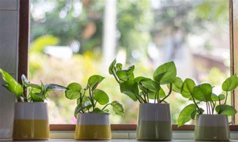 meuble pour plantes d intérieur conseils pour l achat et l entretien des plantes d int 233 rieur trucs pratiques