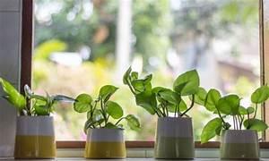 Grande Plante D Intérieur Facile D Entretien : conseils pour l achat et l 39 entretien des plantes d ~ Premium-room.com Idées de Décoration