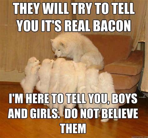 Know Your Meme Dog - image 512111 storytelling dog know your meme