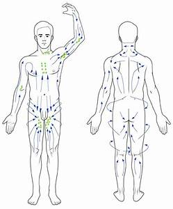 Lymphatic Drainage Flowchart
