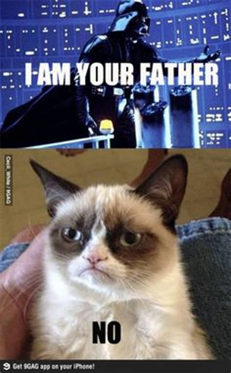Star Wars Cat Meme - 1000 images about cat memes on pinterest star wars grumpy cat and star wars meme