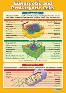 Science  Pure  U0026 A Level