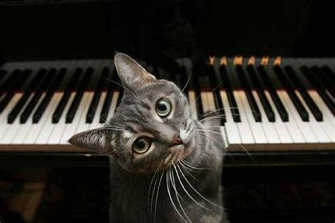 Cat Playing Piano Meme - nora the cat know your meme