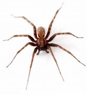Spinnen Fernhalten Wohnung : pfui spinne oder doch nicht cleankids magazin ~ Whattoseeinmadrid.com Haus und Dekorationen