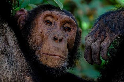 12 fakti par dzīvniekiem, kas tos padara cilvēcīgākus par pašiem cilvēkiem - Spoki