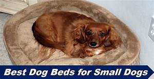 best dog beds for small dogs in 2018 little crate pads With best dog crates for small dogs