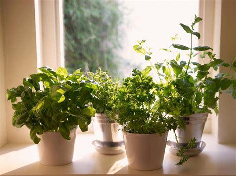 How To Plant A Windowsill Herb Garden  Howtos Diy