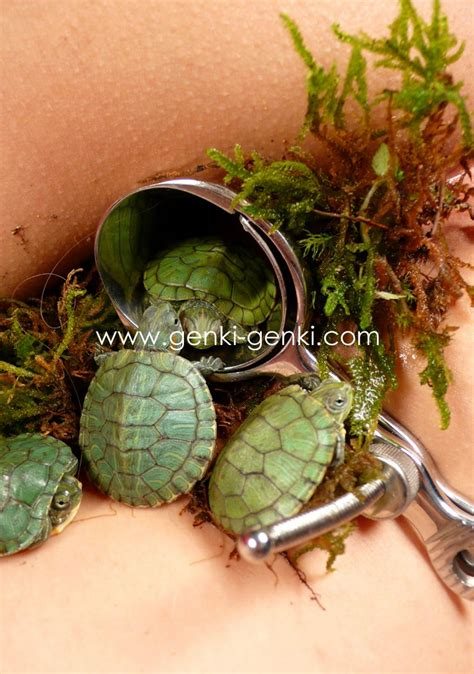 Turtles And Moss In A Vagina Nsfw Imgur