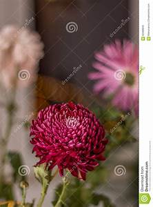 Water Drops On Purple Flower Stock Photo - Image: 62468849