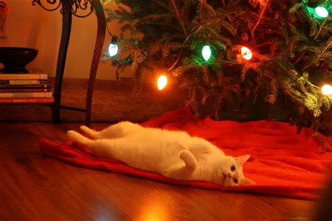cats love christmas trees  blog   internet