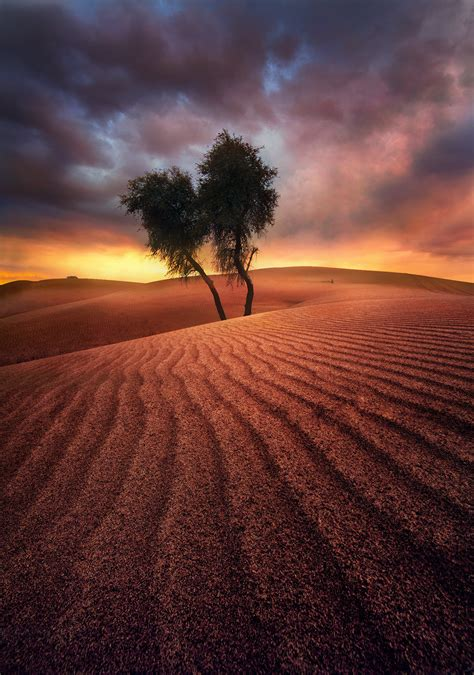 Together Alone (2011) : United Arab Emirates : Marc Adamus ...