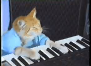 piano cat keyboard cat gif find on giphy