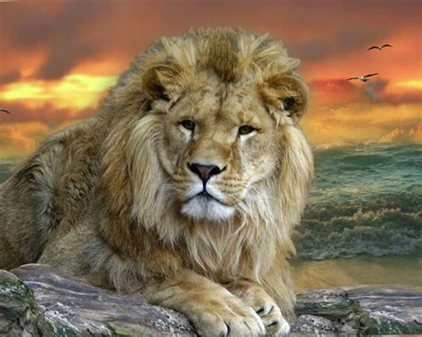 cool wild animal wallpapers long wallpapers