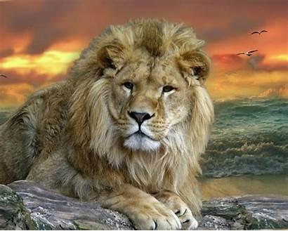 Animals Wild Animal Wallpapers Desktop Background Google