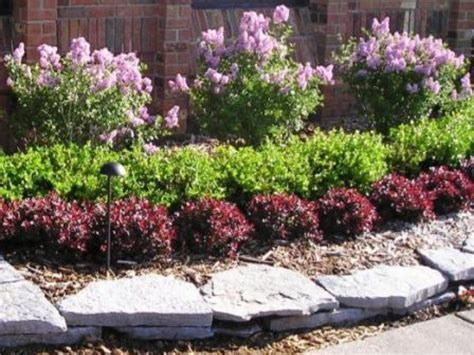 bushes for landscaping landscaping hedges and bushes trees nurseries and tennessee