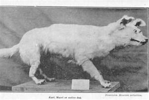 These Strange Extinct Dog Breeds Are Rarely Talked About ...