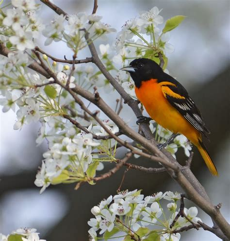 links  popular bird posts  garden walk garden talk