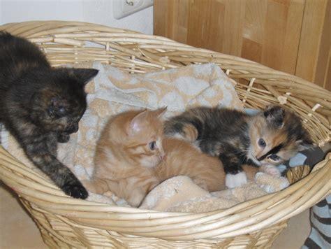Zu Verschenken by Katzen Hauskatzen Tieranzeigen Seite 40
