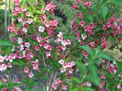 wit blad rode rand witte bloemen vijver heester met roze bloemen