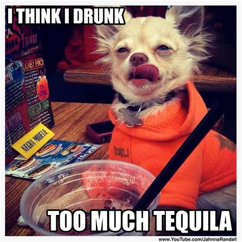 Tequila Memes - 17 tequila memes that ll make your day sayingimages com
