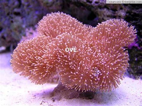 Great Barrier Reef Coral Types