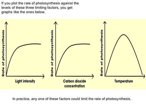 Photosynthesis likewise High Biology  Photosynthesis Worksheet Pack   TpT in addition Photosynthesis also Photosynthesis Limiting Factors Data ysis Sheets by David Chalk furthermore Photosynthesis Worksheet also IB Biology Photosynthesis 2015 likewise Photosynthesis in addition Master frameset together with Carrying Capacity Worksheet   Oaklandeffect moreover  additionally  also  likewise  besides Photosynthesis and the Law of Limiting Factors by Astronyxis additionally  furthermore Photosynthesis Limiting Factors Data ysis Sheets. on limiting factors of photosynthesis worksheet