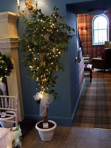 Indoor Hanging Plants Low Light Ficus Trees 1 8 Metres With Wedding Sashes And Pots