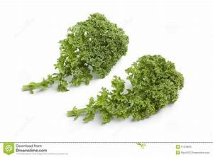 Curly Kale Leaves Royalty Free Stock Photo - Image: 17279875