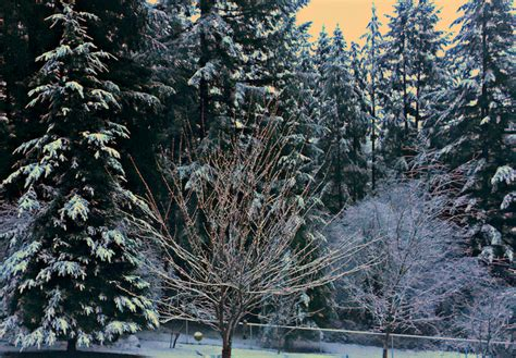 winter power outages  clark county wa