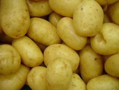 Pomme De Terre Prospère by Petit Dossier Sur La Pomme De Terre P 233 Ch 233 S Mignons