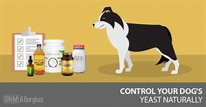 5 natural solutions for yeast in dogs