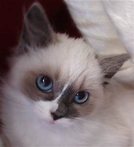 Paw de Chat: The Most Beautiful Cat in the World