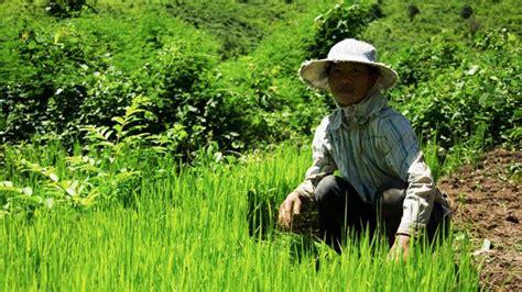 irin laos land grabs drive subsistence farmers