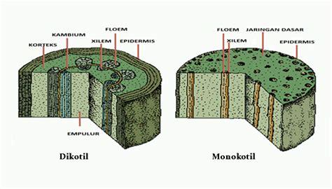 struktur morfologi anatomi batang tumbuhan