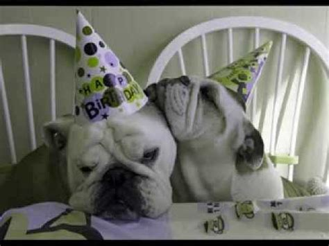 happy birthday bulldog birthday wishes youtube