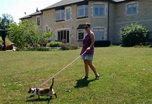 meet the toronto pet sitters staying in dream homes around With dog sitters that stay at your home