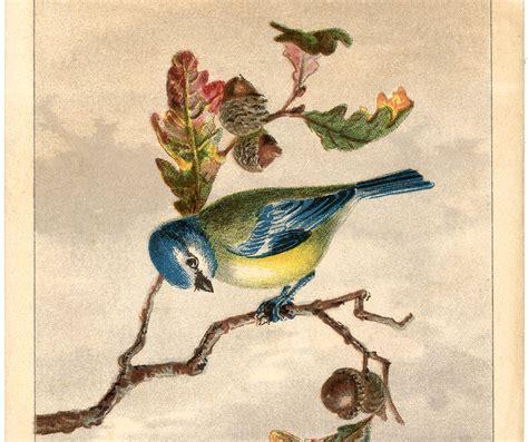 Free Vintage Bird Clip Art Marvelous The Graphics Fairy