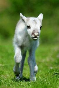 Best 25+ Cutest animals ideas on Pinterest | Cute animals ...