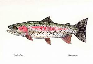 Trout, Salmon and Char - Jeff Currier