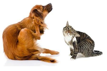 le si鑒e social socialdogcat perché il o il gatto si gratta le orecchie e scuote la testa