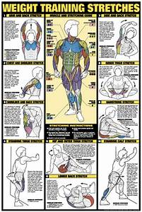 Weight Training Stretches Poster - Laminated (Fitness Charts)